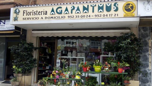 Imagen de Floristería Agapanthus